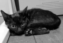 Minion, gatito