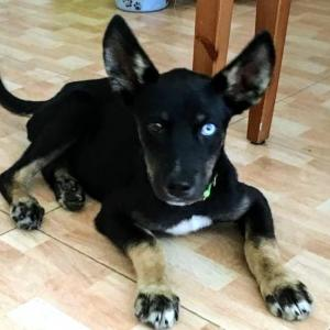 Harley (cachorro)