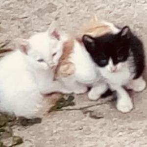 Cachorritos gatitos en Piera
